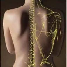 Chiropractors Adelaide